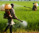 workplace safety spraying fields